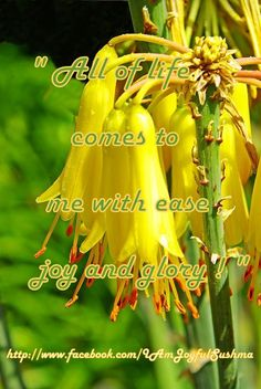 """""""All of life comes to me with ease,joy and glory!"""""""