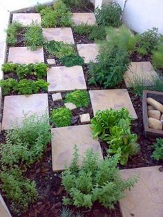 (good for my front yard) Clever design for an easy access & fragrant herb garden. Would work well for a kids micro veggie garden with colourful painted pavers. Herb Garden Design, Edible Garden, Easy Garden, Easy Small Garden Ideas, Kitchen Garden Ideas, Kitchen Gardening, Garden Bed, Dream Garden, Garden Planning