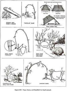 Snare survival