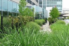 Gardens in Healthcare and Related Facilities