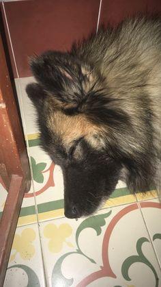 #dog #yanko #sleep