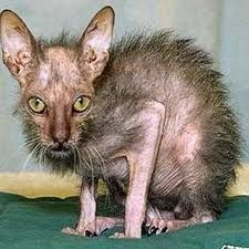 I love ugly animals they are always kind of cute