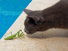 Phoebe y la mantis