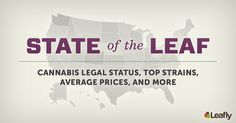 Leafly's State of the Leaf Cannabis Infographic