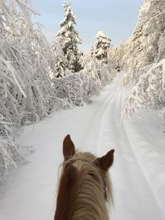 """Anna Wallin in As Seen Through Horses' Ears. """"I'm ready when you are..."""" living the dream and loving winter fun ❄️ Middle of Sweden a perfect winter day -9 c with my north Swedish trotter Ludde."""