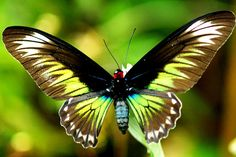 pics of butterflies | July 30, 2011 By Sean Rogders 1 Comment