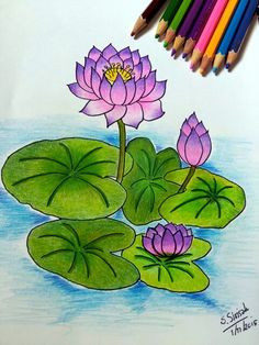 Lotus # 1 # Colored pencil drawing