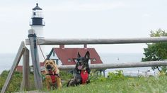Portland, Maine offers plenty of pet friendly activities! We spent a day exploring the city with our dogs and have the highlights on trails, parks  restaurants. Find more pet friendly places to stay and things to do in Portland here: http://www.gopetfriendly.com/browse/united-states/maine/portland