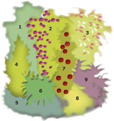 Pilariomenapuu suunnitelma Nro Taimia Tiheys 1. Piippuköynnös 1 kpl 1 kpl/m2 2. Viinikärhö 1 kpl 1 kpl/m2 3. Laikkuköynnös 1 kpl 1 kpl/m2 4. Kartiotuija 1 kpl 1 kpl/m2 5. Marjakuusi, matala 4 kpl 4 kpl/m2 6. Alppiruusu 'Haaga' 1 kpl 1 kpl/m2 7. Pilariomenapuu 1 kpl 1 kpl/m2 8. Pensashanhikki 1 kpl 4 kpl/m2 9. Purppurahappomarja 3 kpl 3 kpl/m2 Clematis, Garden, Garten, Lawn And Garden, Gardens, Gardening, Outdoor, Yard, Tuin
