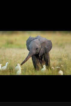 Baby elephant making friends! ☺