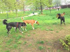 02/04/2016 - Torino con Leia, Lea e Kira