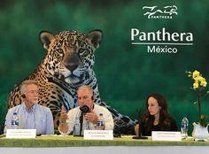 Se suma México a la Organización Mundial PANTHERA