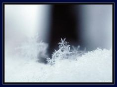 the intricacies of a snowflake