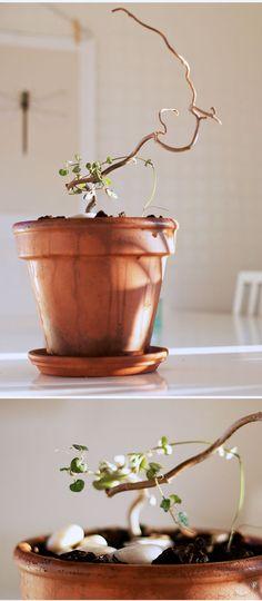 Little miss fix it - - live fast DIY young Little Miss, Flower Power, Planter Pots, Flora, Patio, Lights, Garden, Tips, Plants