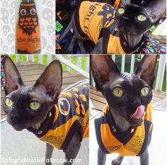 "Princess in her "" I love the Nightlife"" Halloween shirt from Sphynx Nudie Patootie! You'll love the sparkle and hand studded details!"
