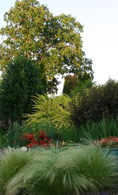 Xeriscape Gardening, drought tolerant plants, grasses, native trees, succulents, cacti, cattle, sheep, wildlife