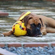 Tem alguém aí pra brincar comigo? . . Can you play with me?