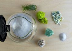 Would You Like To Have A Cup Of Terrarium? A Cup Of Coffee? If you like coffee and planting, why not make this cute cup of terrarium? Chances are Mini Terrarium, How To Make Terrariums, Air Plant Terrarium, Fertilizer For Plants, The Whoot, Air Plants, Indoor Plants, Indoor Gardening, Dish Towels