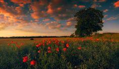 Poppy sunset in Pidhirtsi, Ukraine by Vlad Observer