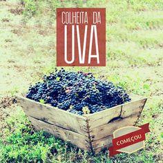 Vinhos Dom Emilio l Certificação dos orgânicos: garantia de qualidade.