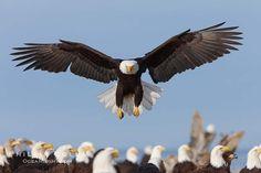 No seas borrego, vuela como las águilas. Tú espíritu y esencia son únicos como nuestros viajes. A la carta, limitados, hechos a medida de tu búsqueda y aventura.
