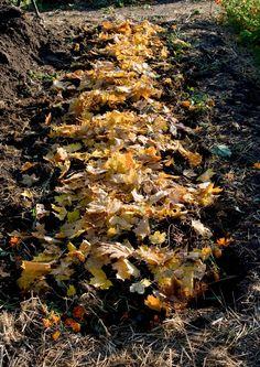 Lämpöpenkki aikaistaa viljelyä ja tuottaa runsaan sadon. Sen voi tehdä pieneenkin pihaan. Lue Viherpihan ohjeet ja perusta lämpöpenkki puutarhaan.