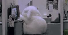 Just pinning for this bunny. He says. I... Don't wanna work.