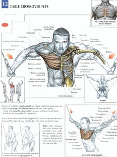Cable Crossover Flys ♦ #health #fitness #exercises #diagrams #body #muscles #gym #bodybuilding #chest