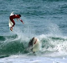 shark-vs-surfer