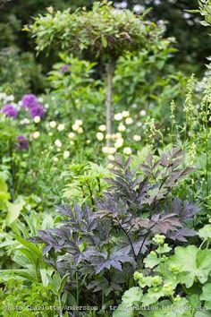Trädgårdsflow: Juni