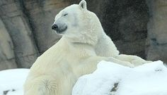 Top Reasons to Visit the KC Zoo this Winter