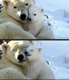 Polar bear with baby panda Cute Baby Animals, Animals And Pets, Funny Animals, Wild Animals, Baby Pandas, Nature Animals, Beautiful Creatures, Animals Beautiful, Tier Fotos