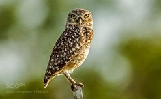 Look to Me by JacksonCarvalho #animals #animal #pet #pets #animales #animallovers #photooftheday #amazing #picoftheday