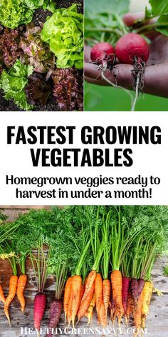 These quick-growing crops can be ready in as little as 2 weeks! Check out 20 of the fastest growing vegetables and harvest delicious home-grown veggies SOON. #gardenhacks #gardening #vegetablegardening #growingfood Gardening Hacks, Organic Gardening, Fast Growing Vegetables, Clean Eating, Healthy Eating, Green Living Tips, Urban Homesteading, Delicious Fruit, Frugal Meals