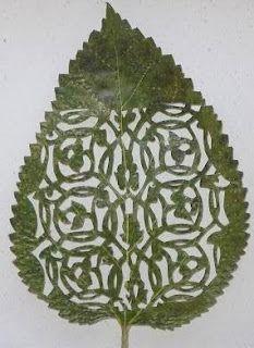 Intricate and beautiful leaf