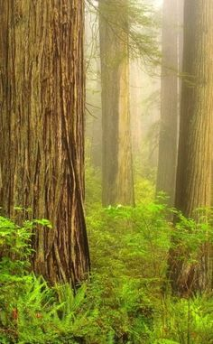 Redwood National and State Parks | Travel | Vacation Ideas | Road Trip | Places to Visit | CA | Fall Foliage | State Park | National Park | Nature Reserve | Forest | Hiking Area