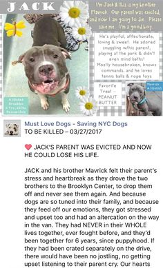 SAFE❤️❤️ 3/29/17 BY SCOOBY DOO'S RESCUE MISSION❤️ THANK YOU SO VERY MUCH❤️ LOVE THIS POOR BOY❤️❤️ /ij🐾🐾 Brooklyn Center My name is JACK. My Animal ID # is A1106066. I am a male blue and white pit bull mix. The shelter thinks I am about 6 YEARS old. A private donor has graciously offered to pay $500 to the New Hope partner that pulls I came in the shelter as a OWNER SUR on 03/12/2017 from NY 10468, owner surrender reason stated was OWN EVICT. http://nycdogs.urgentpodr.org/jack-a1106066/