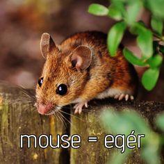 Tanulj angolul - Angol szavak - Tanulás Animals, Animaux, Animales, Animal, Dieren