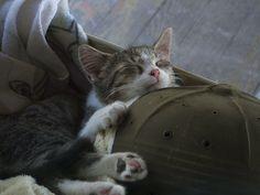 Sleepy Tonks