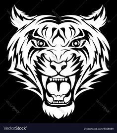 White Tiger Face vector image on VectorStock