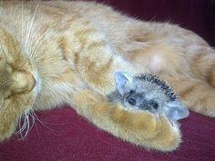 cica süni - Google keresés