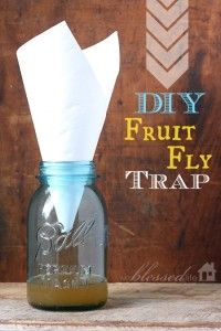 How to make a fruit fly trap in less than a minute