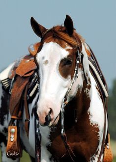 eye cutout face mask eye cutout face mask - Art Of Equitation All The Pretty Horses, Beautiful Horses, Animals Beautiful, Cute Animals, Painted Horses, Horse Photos, Horse Pictures, Cheval Pie, American Paint Horse