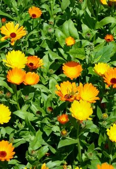 Healing Herbs, Plants, Beauty, Gardens, Medicinal Plants, Hobbies, Plant, Beauty Illustration, Herbal Medicine