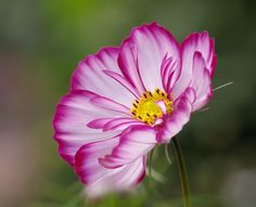 Flower power by samiKoo on 500px