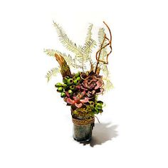 Home Decor gift guide. Succulent arrangement ($75 for similar style; hidden-folk.com) by Hidden Folk in Logan Square.
