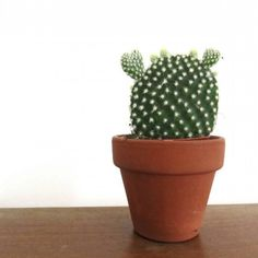 How to repot a cactus and not get hurt Are you scared of repotting your cactus? No fear. Find out how to repot a cactus and not get hurt. Bunny Ear Cactus, Cactus Pot, Cactus Flower, Flower Pots, Indoor Cactus Plants, Cactus House Plants, Cactus Decor, Indoor Herbs, Cacti Garden