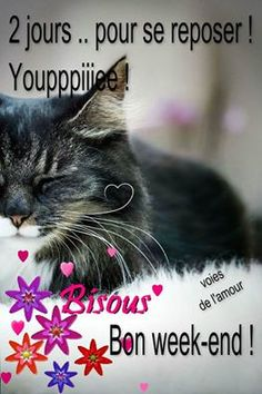 Bon Weekend, Image Fb, French Quotes, Messages, Words, Animals, Cute Animals, Electronic Cards, Handsome Quotes