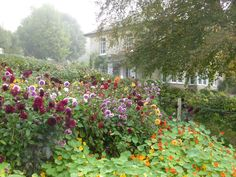 - With the arrival of rains and falling temperatures autumn is a perfect opportunity to make new plantations Garden, Rock Garden Landscaping, Autumn Garden, Nasturtium, Country Gardening, Dorset Garden, Garden Planning, Dahlias Garden, Garden Spaces