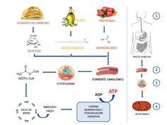 kinebioactiva: Fatiga y contracturas musculares, causas y algunas...